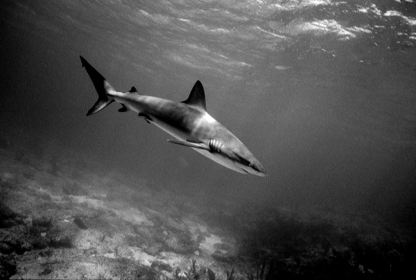 Freediving With A Sea Wolf:Part II freediving profiles reviews  Wolfgang leander Sharks freediving Felix Leander