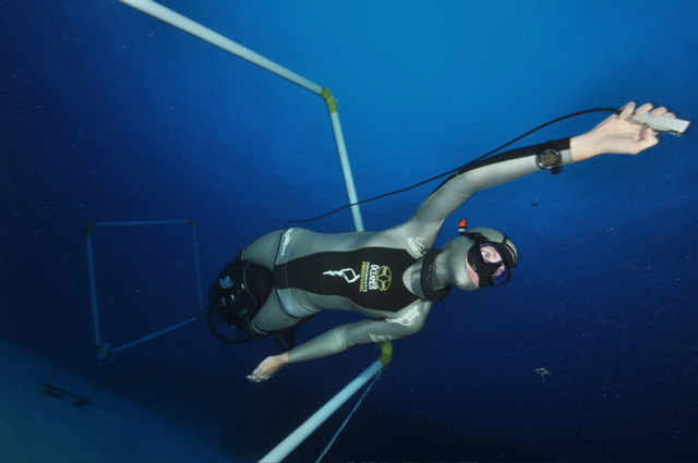 Formula 3 Freediving by Performance Freediving International freediving  news freediving