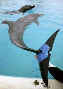 Dolphin Prosthesis