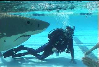 sharksub-diver.jpg