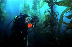 Kelp Diving 2
