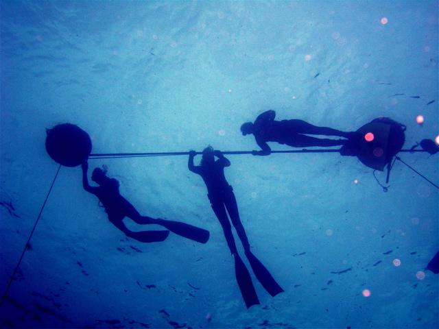 Girls Go Deep freediving education training  PFI performance freediving freediving