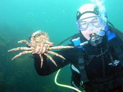 Dive Ireland 3