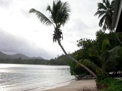 Seychelles - Palm