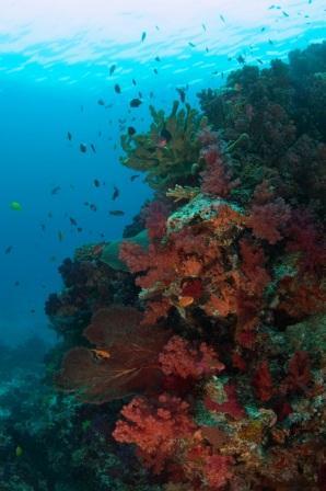 Soft Corals Fiji