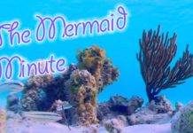 The Mermaid Minute
