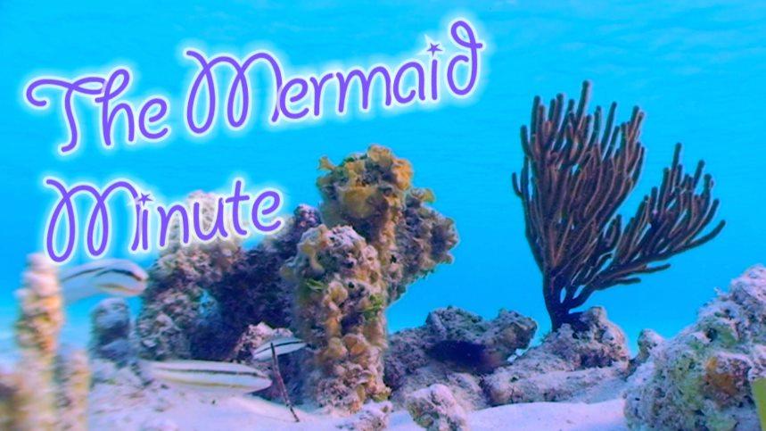 The Mermaid Minute