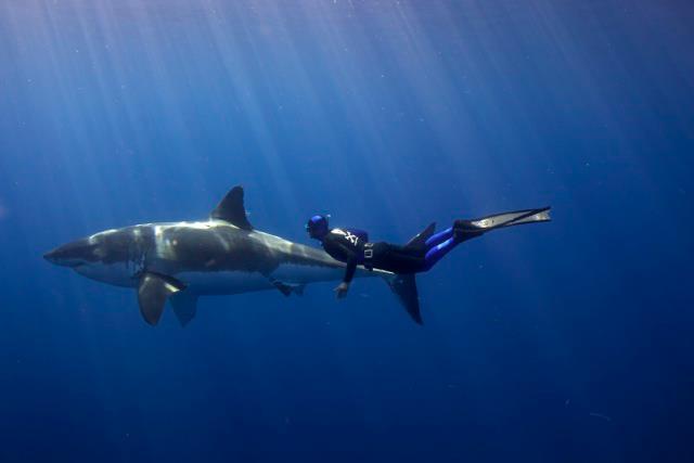 Baja, Mexico 2012: Scientific-Expedition Adventure 3