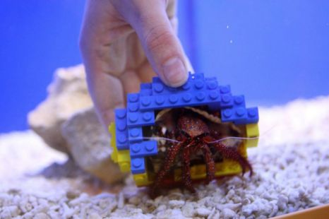 Hermit Crab Provided Multi-Coloured Lego Home 1
