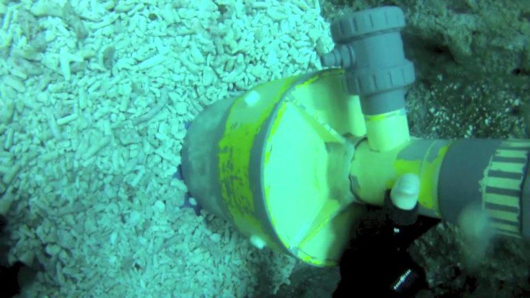 [VIDEO] Close Encounter in Shark Aquarium