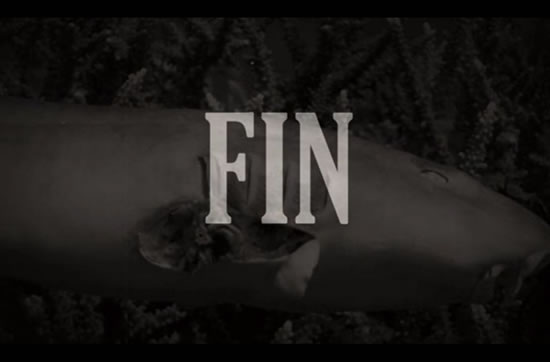 Shocking Video exposes terrible truth about Shark Finning 3