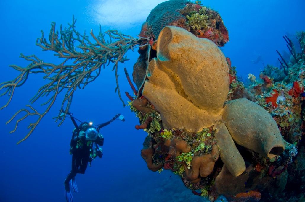 DiveTech On Grand Cayman To Host FocusUnderwater 2013 1
