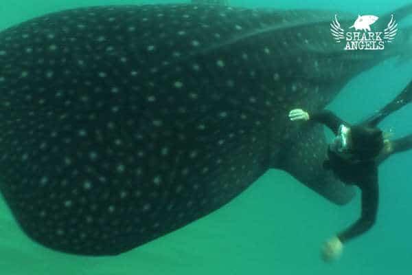 SharkAngelsUnderwater-20