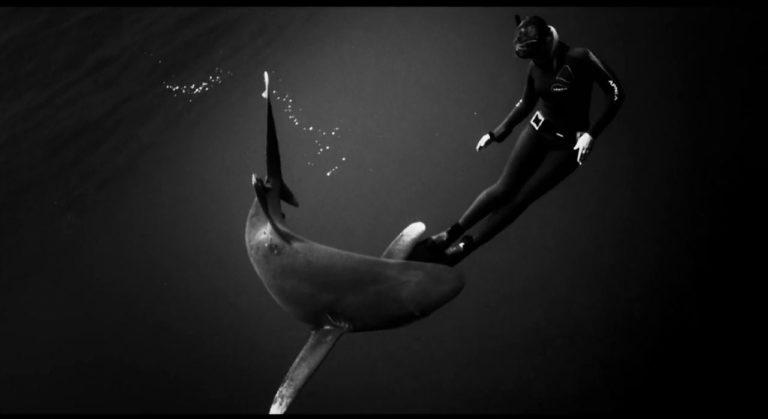[VIDEO] Black Swan