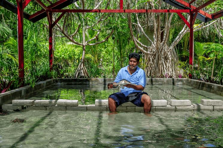 Wakatobi Resort Plays Surrogate Parent To Sea Turtles 2