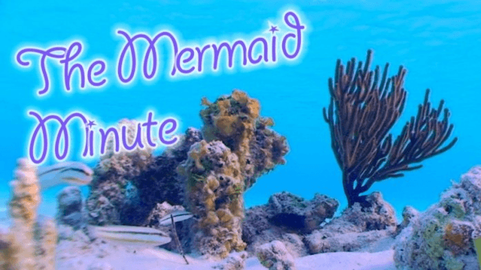 Mermaid Linden Reaches Kickstarter Campaign Goal freediving education training  news mermaid minute mermaid Linden Wolbert kickstarter