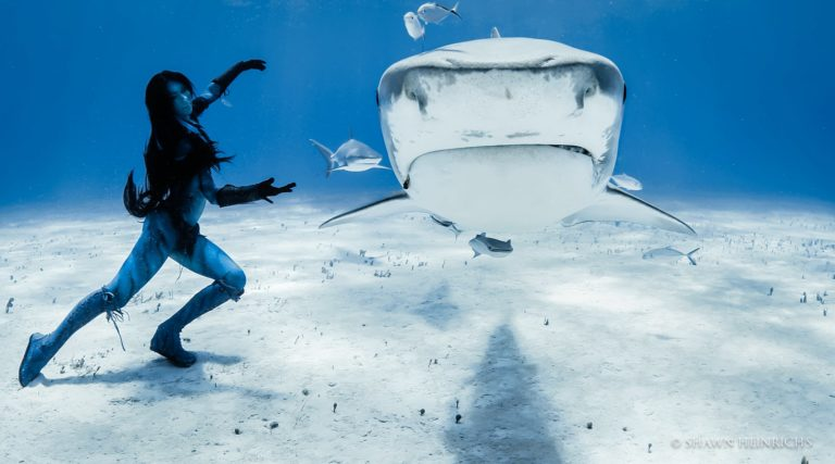 [VIDEO] Woman Dances with Tiger Sharks