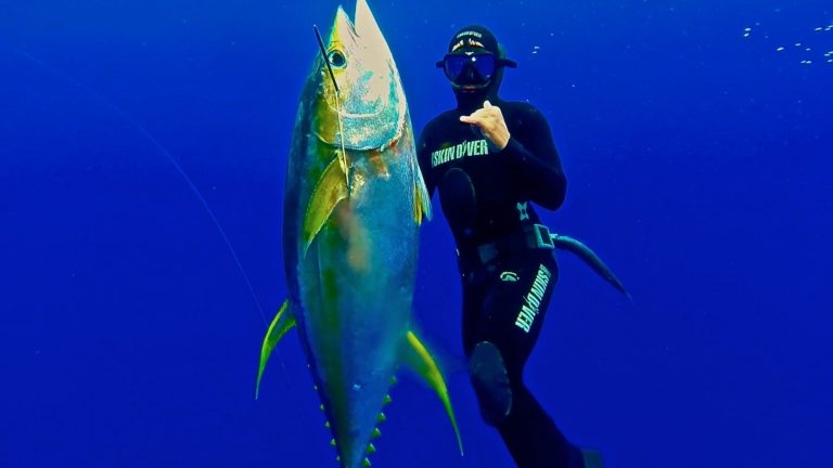 [VIDEO] Spearfishing in Hawaii – it's what we do