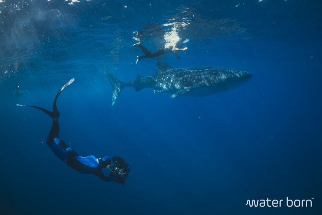 "Water Born TV - Teaser Four ""Filming Whale Sharks"" 1"