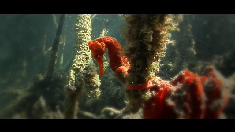[VIDEO] The Beauty of Mangrove Forests