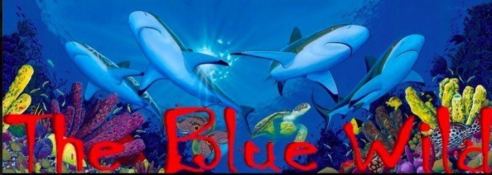 BlueWild