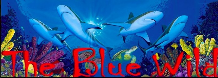 Blue Wild 2015: An Exhibitors Summary 2