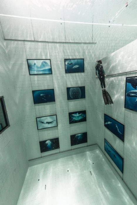 Nemo33 Fred Buyle