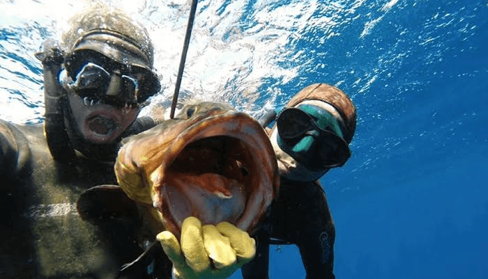 Deep Spearfishing Encylopedia
