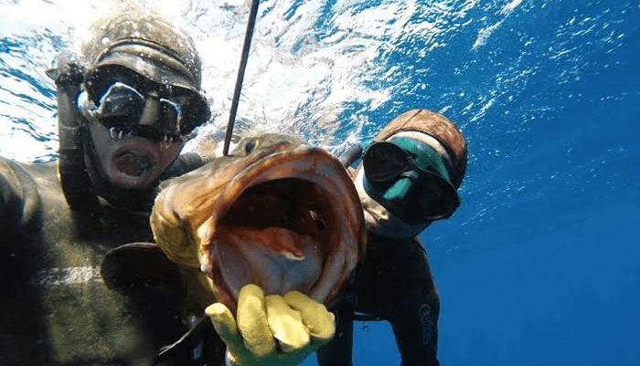 Deep Spearfishing Encylopedia