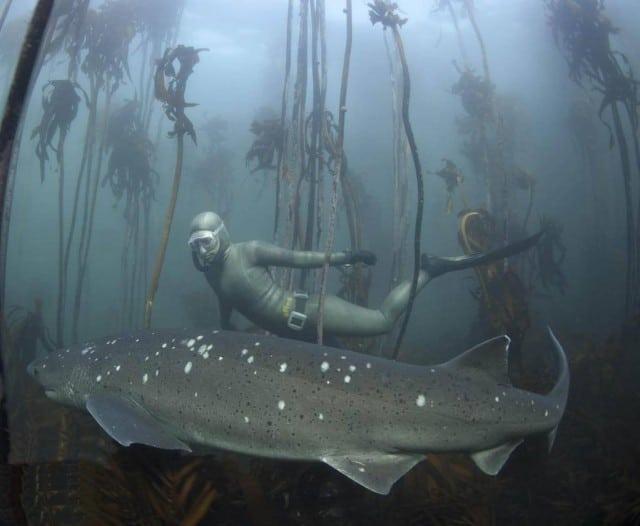 hanli shark