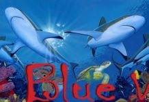 The Blue Wild Logo