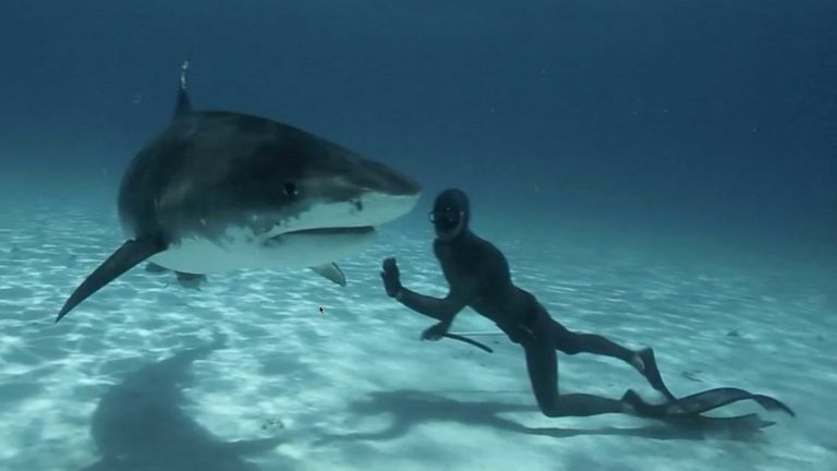 [VIDEO] Freediving with Tiger Sharks