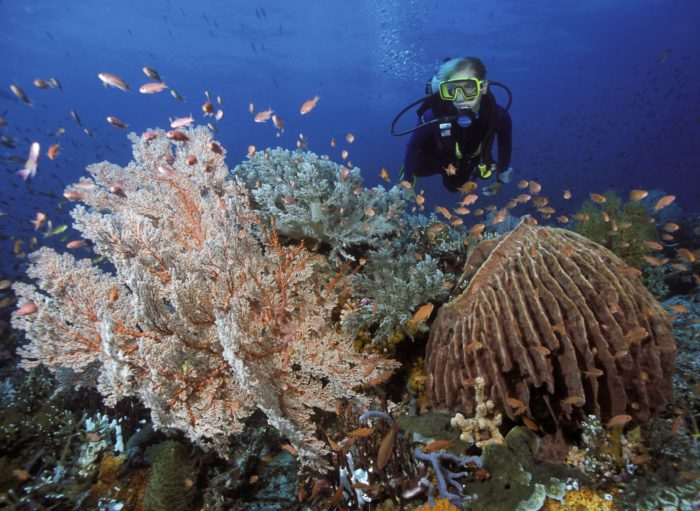 Diving the reefs at Wakatobi