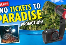 dominica_sealife_sweepstakes