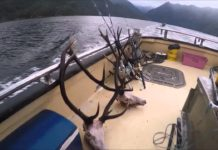 [VIDEO] Freediving and Spearfishing in Fiordland – New Zealand