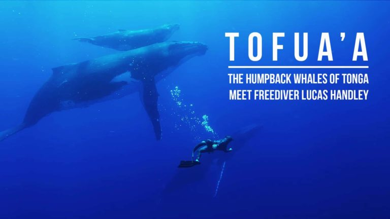 [VIDEO] Seeing Eye to Eye with Tonga's Humpback Whales