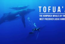 Tofua'a - The Humpback Whales of Tonga Meet Lucs Handley