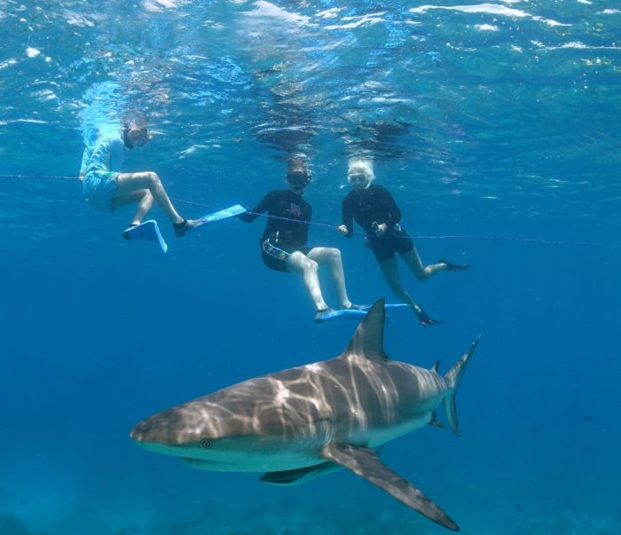 Shark Girls on a Caribbean reef shark dive (Photo credit: Duncan Brake)