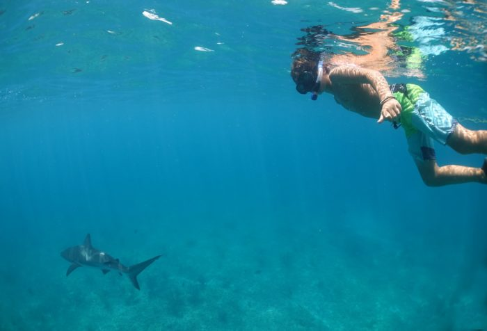 Shark boy diving with Caribbean reef sharks (Photo Credit: Duncan Brake)