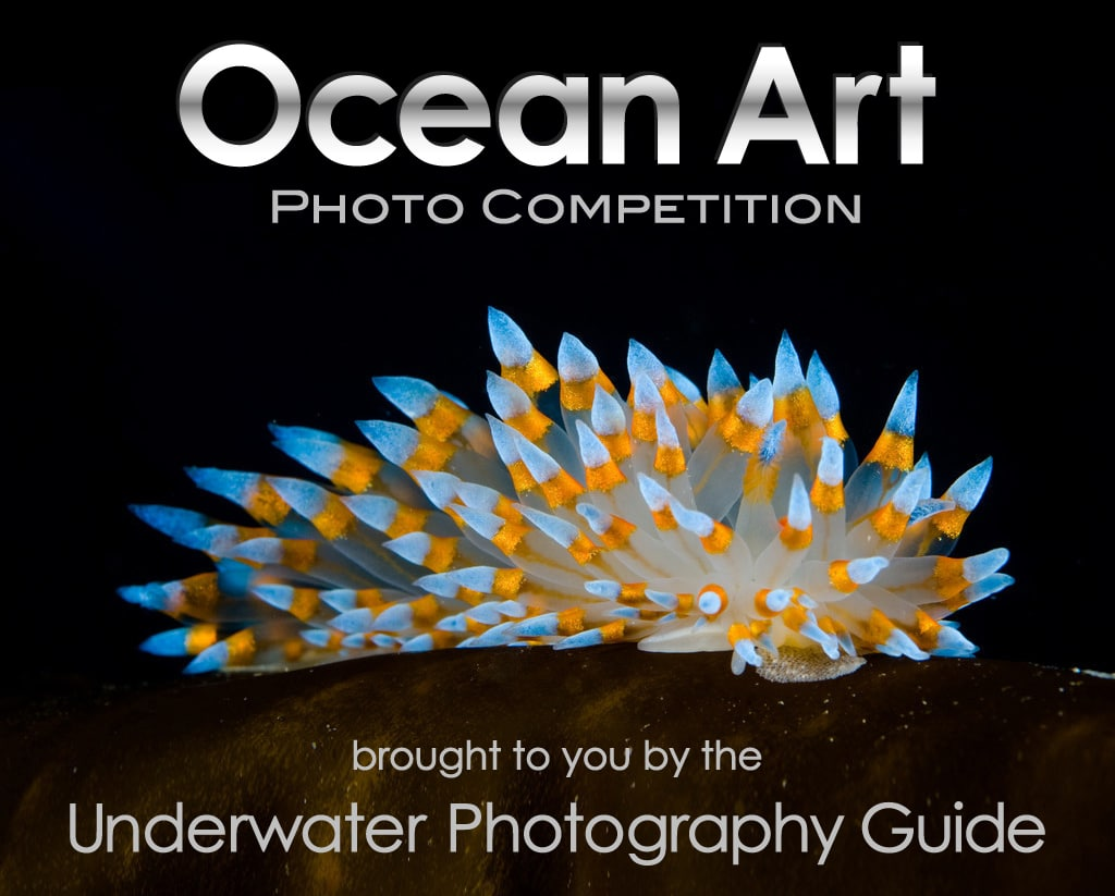 Ocean Art Photo Competition Now Accepting Submissions