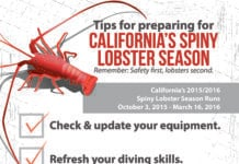 DEMA Releases California Spiny Lobster Season Commercial