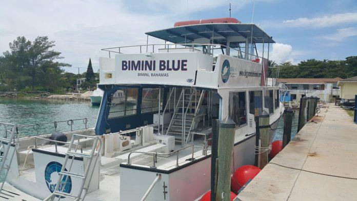 Bimini Big Game Club Resort To Host 'Great Hammerhead Weeks' Dive Encounters