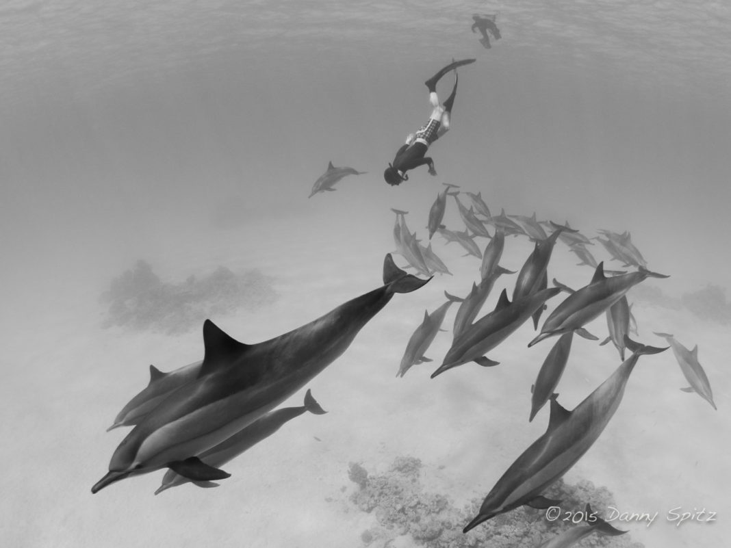 Go Freediving Dolphin & Freediving Liveaboard - Copyright Danny Spitz www.thrublue.co.uk