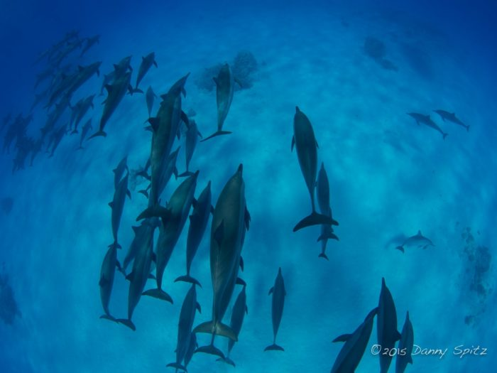 GoFreediving Dolphin & Freediving Liveaboard - Copyright Danny Spitz www.thrublue.co.uk