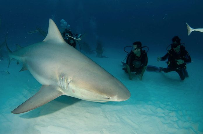 Bull Sharks with Pro Dive Mexico