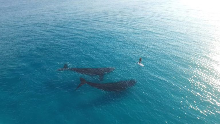 [VIDEO] Paddle Boarding With Whales