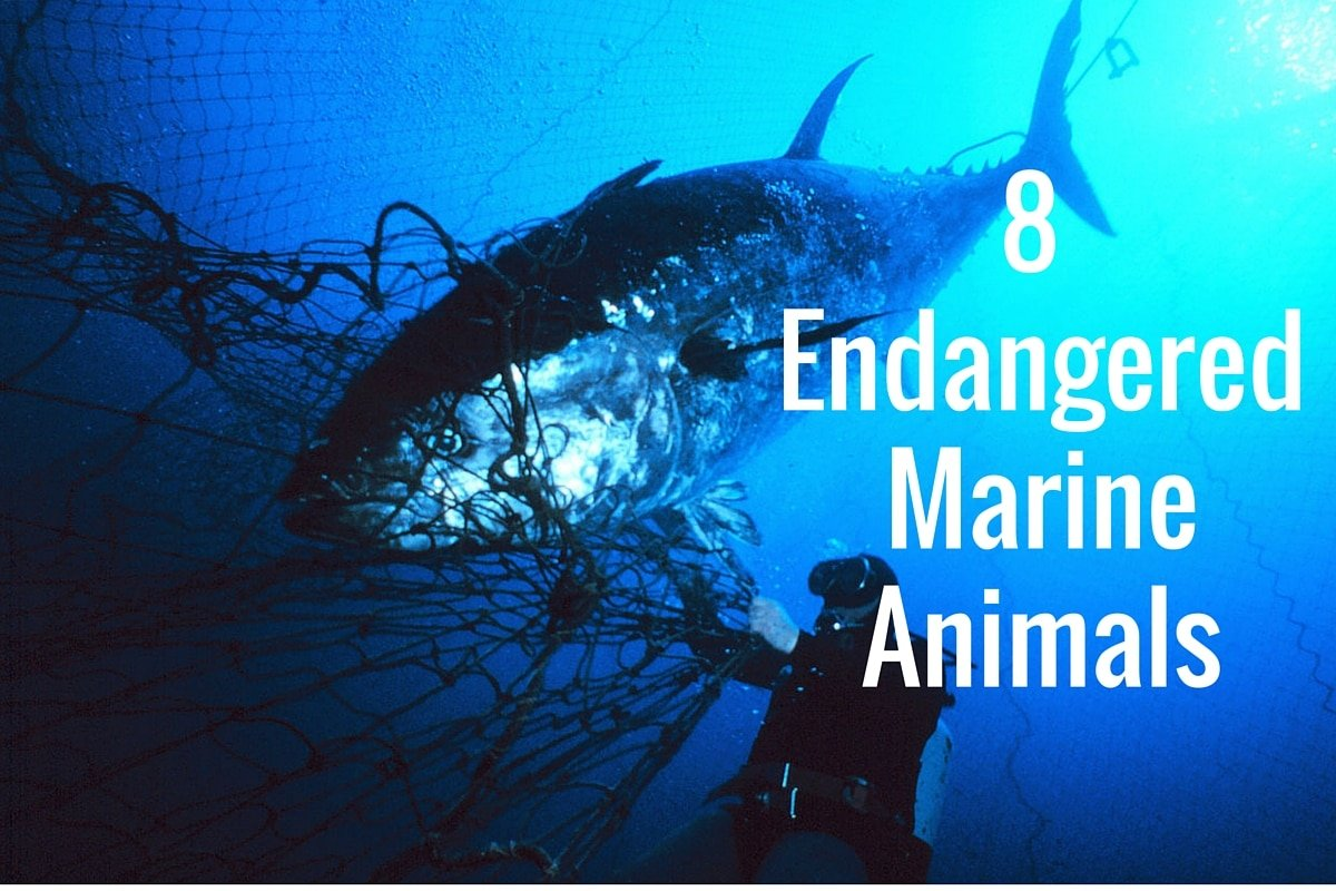 8 Endangered Marine Animals – DeeperBlue.com