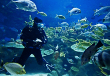 Barry University offers a scuba diving industry management degree (photo credit: Barry University)