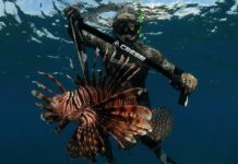 REEF.org spreads message about Lionfish threat at DEMA Show