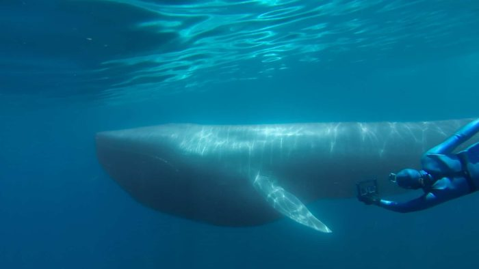 Racing Extinction - The Blue Whale - Courtesy Of GoPro